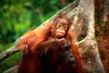 12 Tempat Wisata Terbaik di Indonesia yang Mendunia