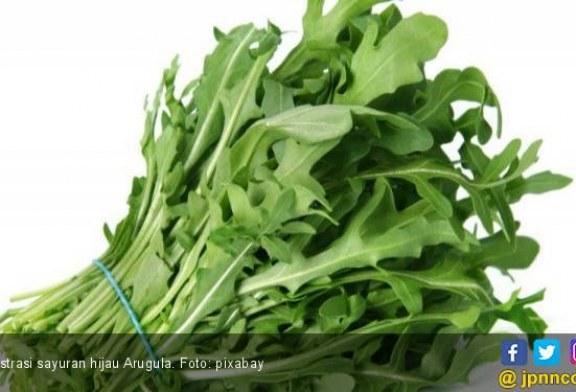 Ketahuilah, 7 Manfaat Mengonsumsi Sayuran Hijau untuk Kesehatan