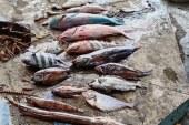 Penjelasan KKP soal Fenomena Ikan Mati Mendadak di Malut