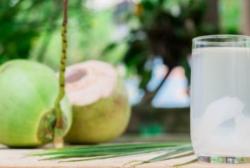 Bolehkah Penderita Gagal Ginjal Minum Air Kelapa?