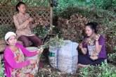 Kelompok Tani Hutan Tetap Panen di Tengah Wabah Corona